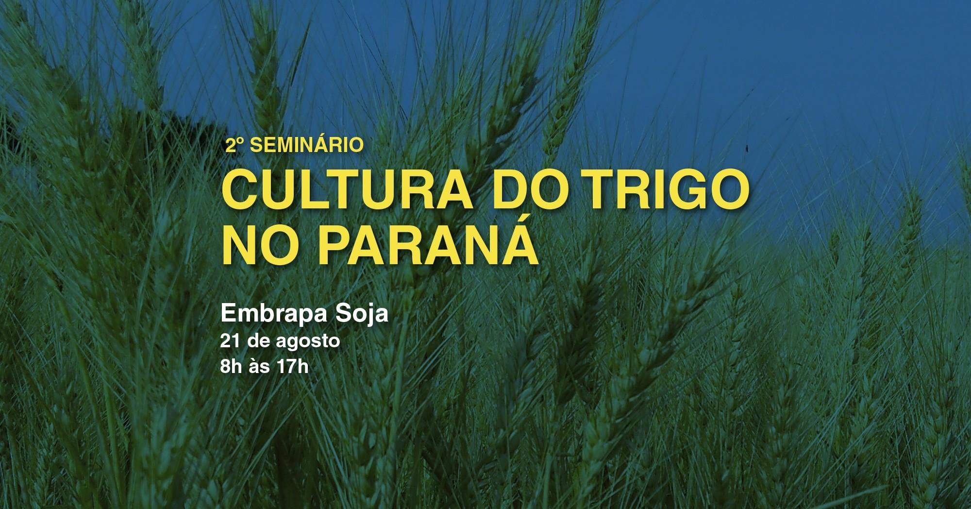 2º Seminário da Cultura do Trigo no Paraná será dia 21 de agosto, em Londrina