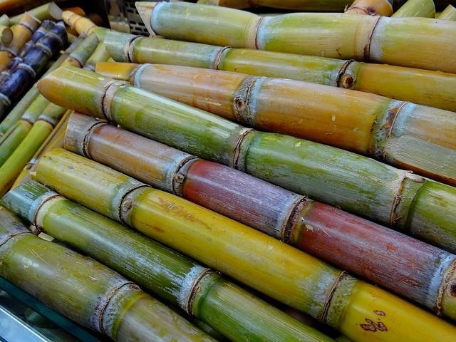 Alta no preço do etanol antecipa colheita da cana-de-açúcar do Brasil