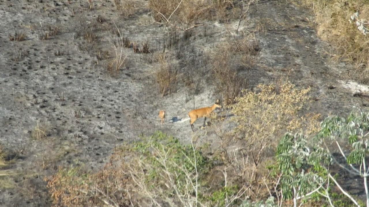 Incêndio já destruiu 35 mil hectares de vegetação do Parque Nacional de Ilha Grande