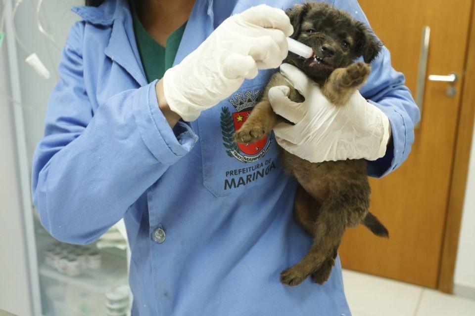 Os cães serão examinados, vacinados, vermifugados e castrados e, em breve, irão para adoção   Foto: Mileny Melo/PMM