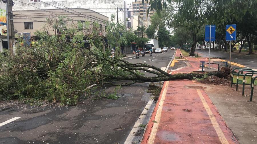Temporal derrubou árvore na Avenida Brasil. Foto: Luciana Peña/CBN Maringá