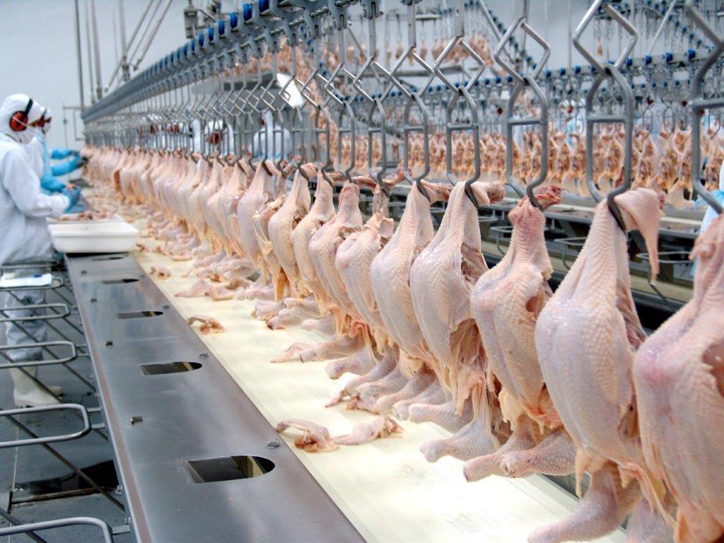 Embargo à exportação de frango pela UE atinge frigoríficos do Paraná