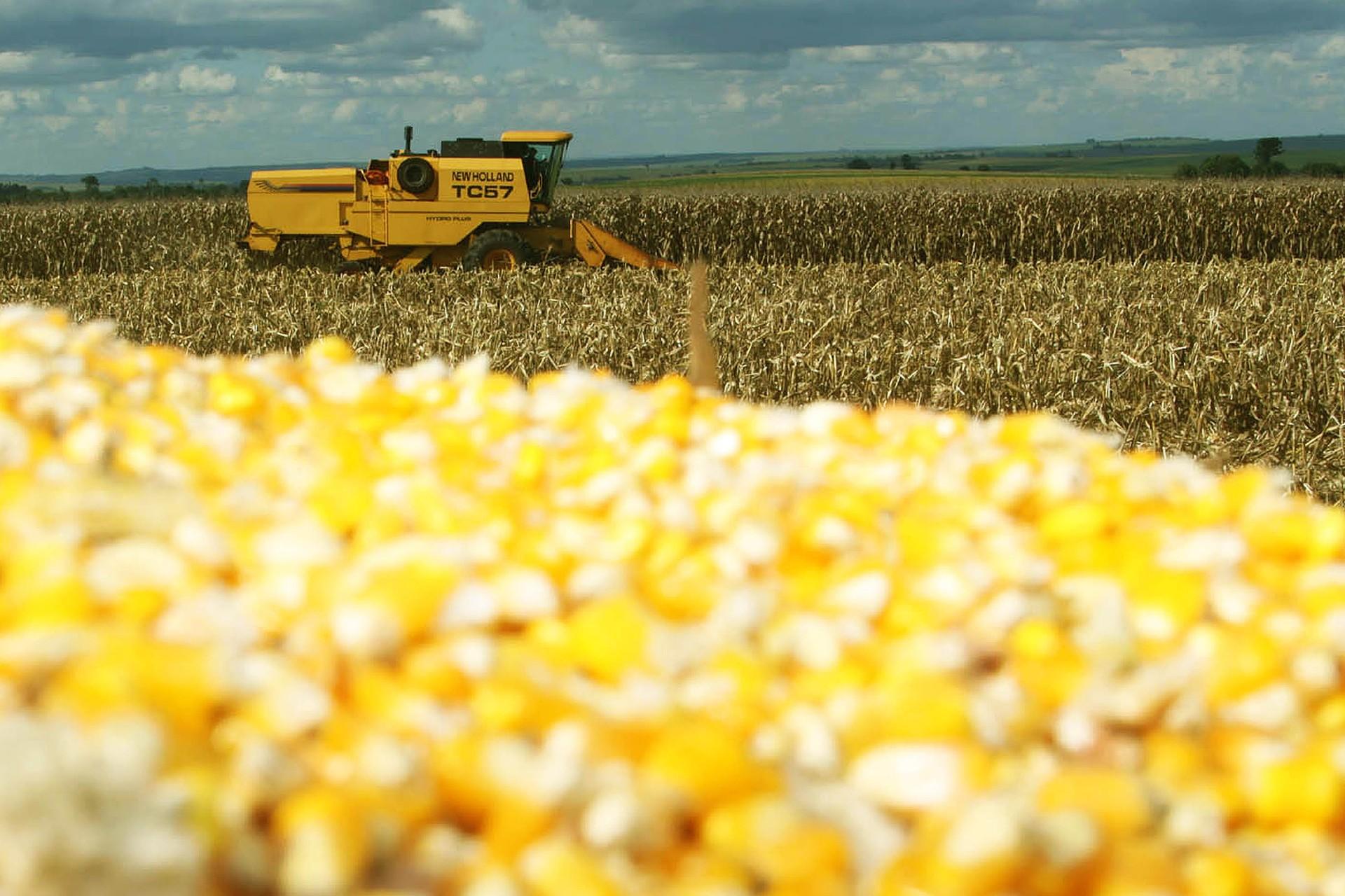 Colheita do milho chega a 41% da área no Paraná