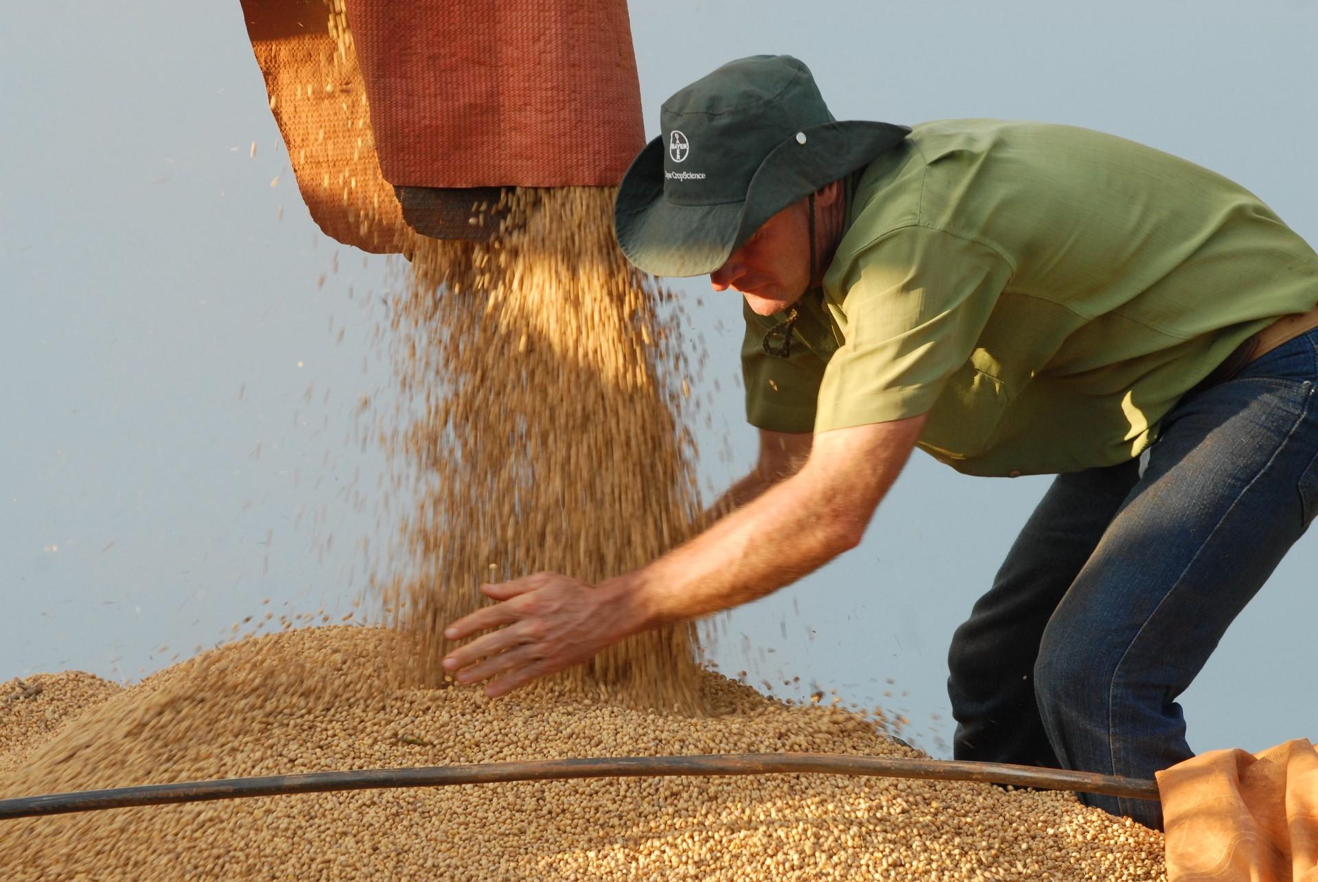 Preço da soja cai 13,41% em oito meses