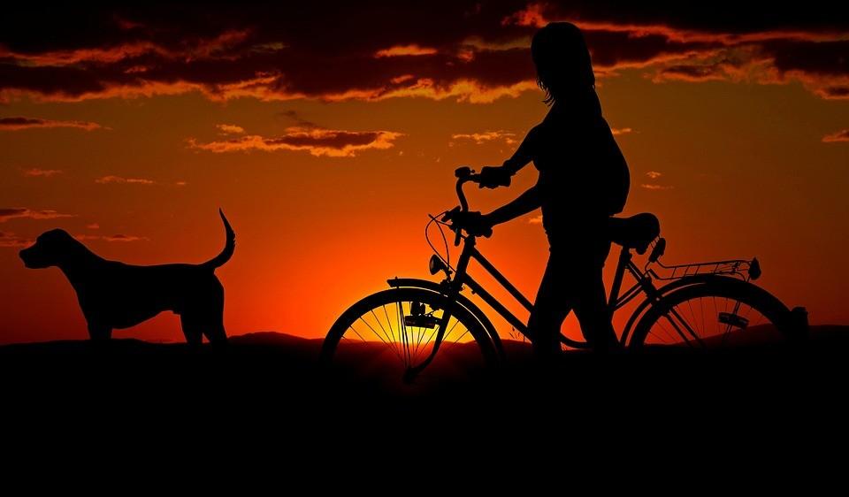 Vai levar seu animal de estimação para viajar?