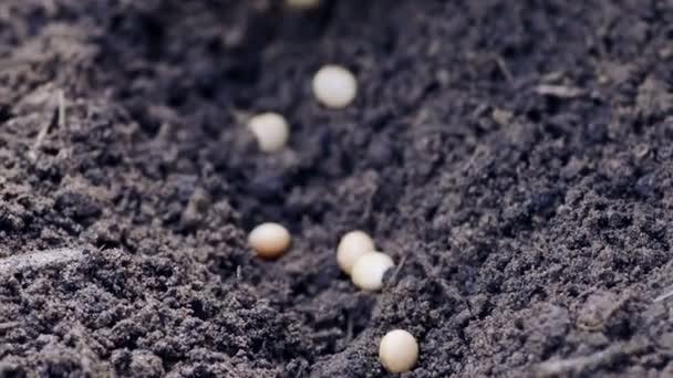 No Paraná, 33% da área prevista para o cultivo da soja já está semeada