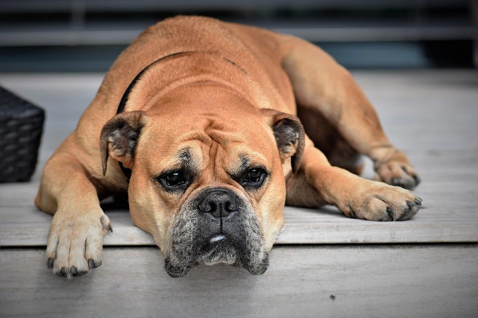 Bem-Estar Animal registra 1.732 denúncias de maus-tratos