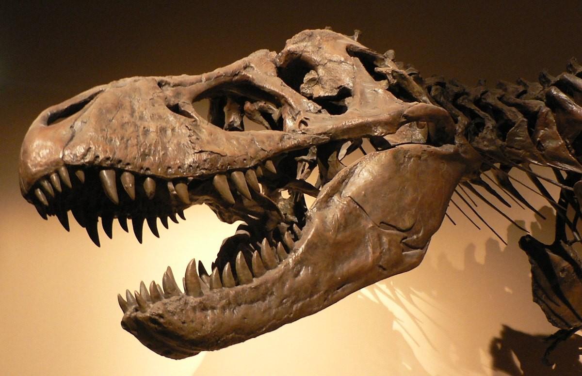 Nova espécie de dinossauro é descoberta em sítio paleontológico
