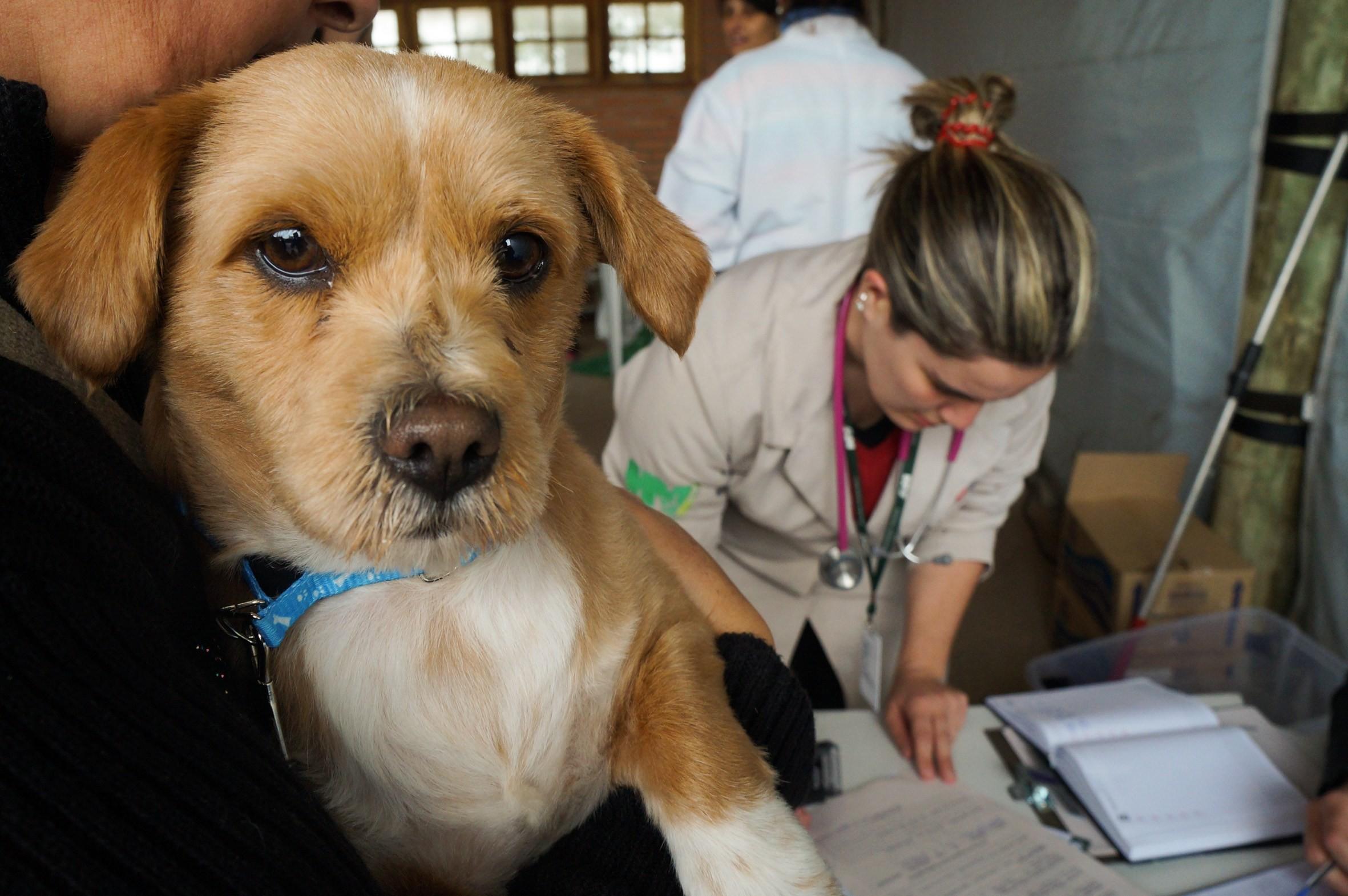 3 mil animais domésticos começam a ser castrados