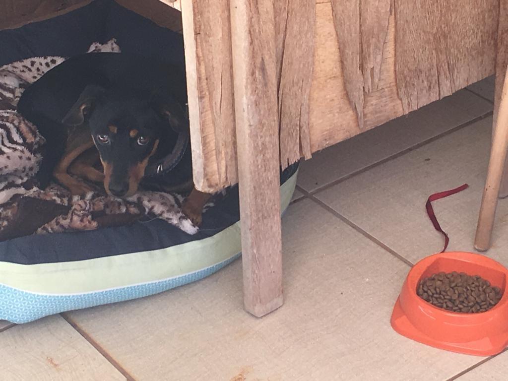 Vigilante da UEM é denunciado à polícia porque pegou um cão que vivia no campus