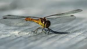 O que aconteceria com mundo se os insetos desaparecessem?