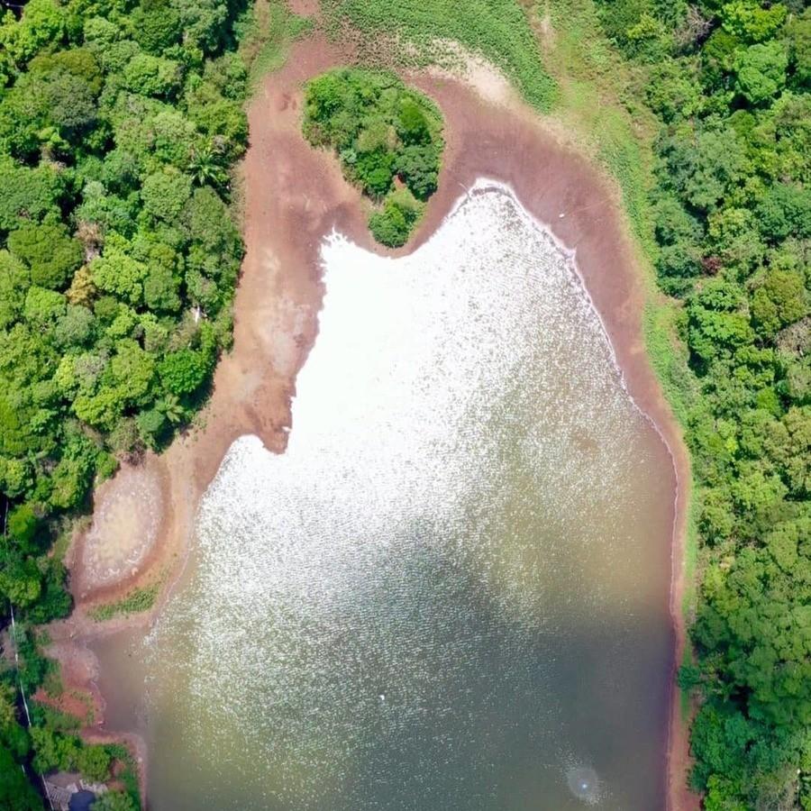 Vegetação avança sobre área que era do lago do Parque do Ingá. Foto: Thiago Louzada