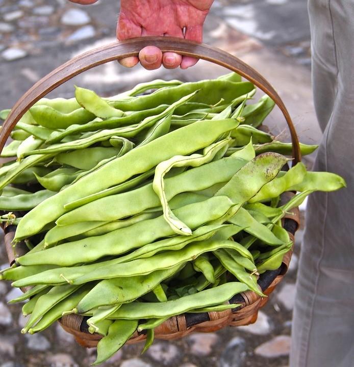 Safra de feijão será de baixa produção e qualidade