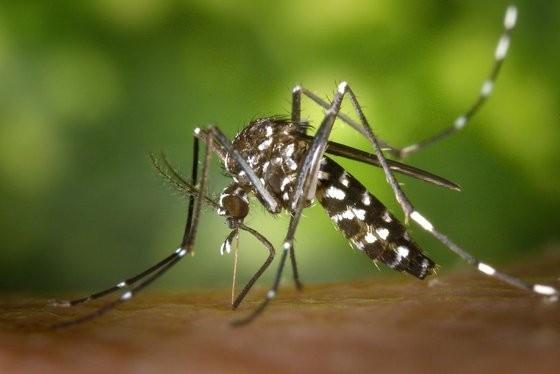Criança de 7 anos morre com suspeita de dengue hemorrágica