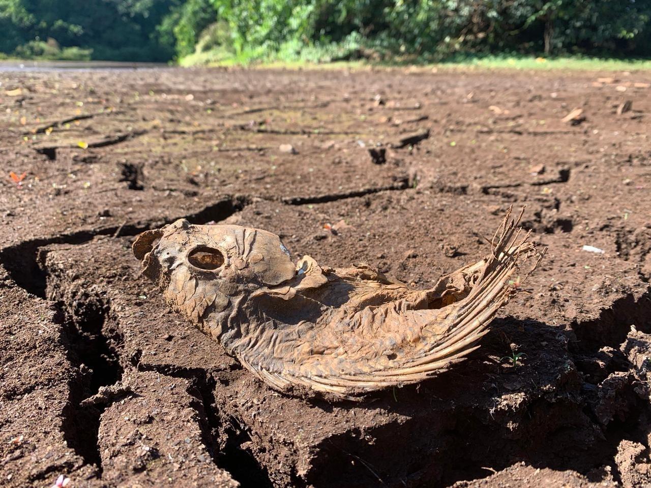 Com a estiagem, nível da água baixou e peixes morreram/ Foto: Fábio Guillen GMC Online