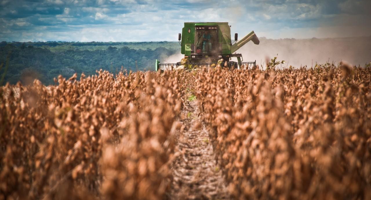 Preço da soja tem alta na região de Maringá