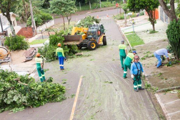 Maringá ainda não tem empresa credenciada para remover árvores