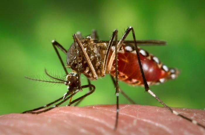 15ª Regional de Saúde concentra quase 50% dos casos autóctones de dengue