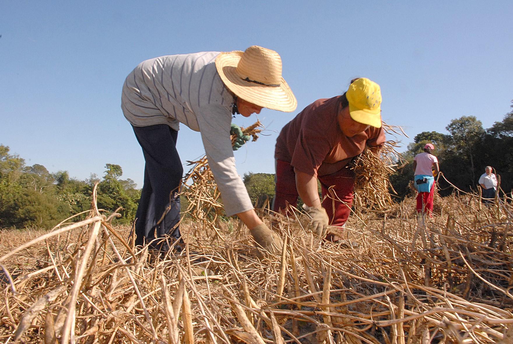 Pesquisa tem como foco mulheres e jovens que vivem no campo