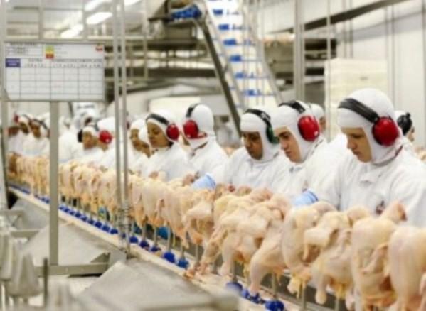 Macedônia do Norte quer aumentar a importação de frangos do Paraná