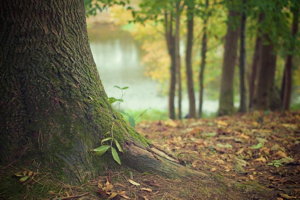 'Árvores de estimação' podem ser registradas