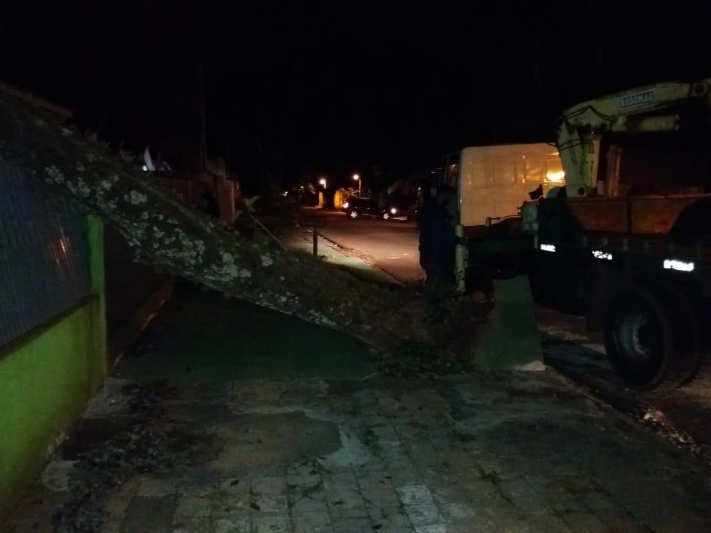 Árvore cai sobre residência na Zona 7