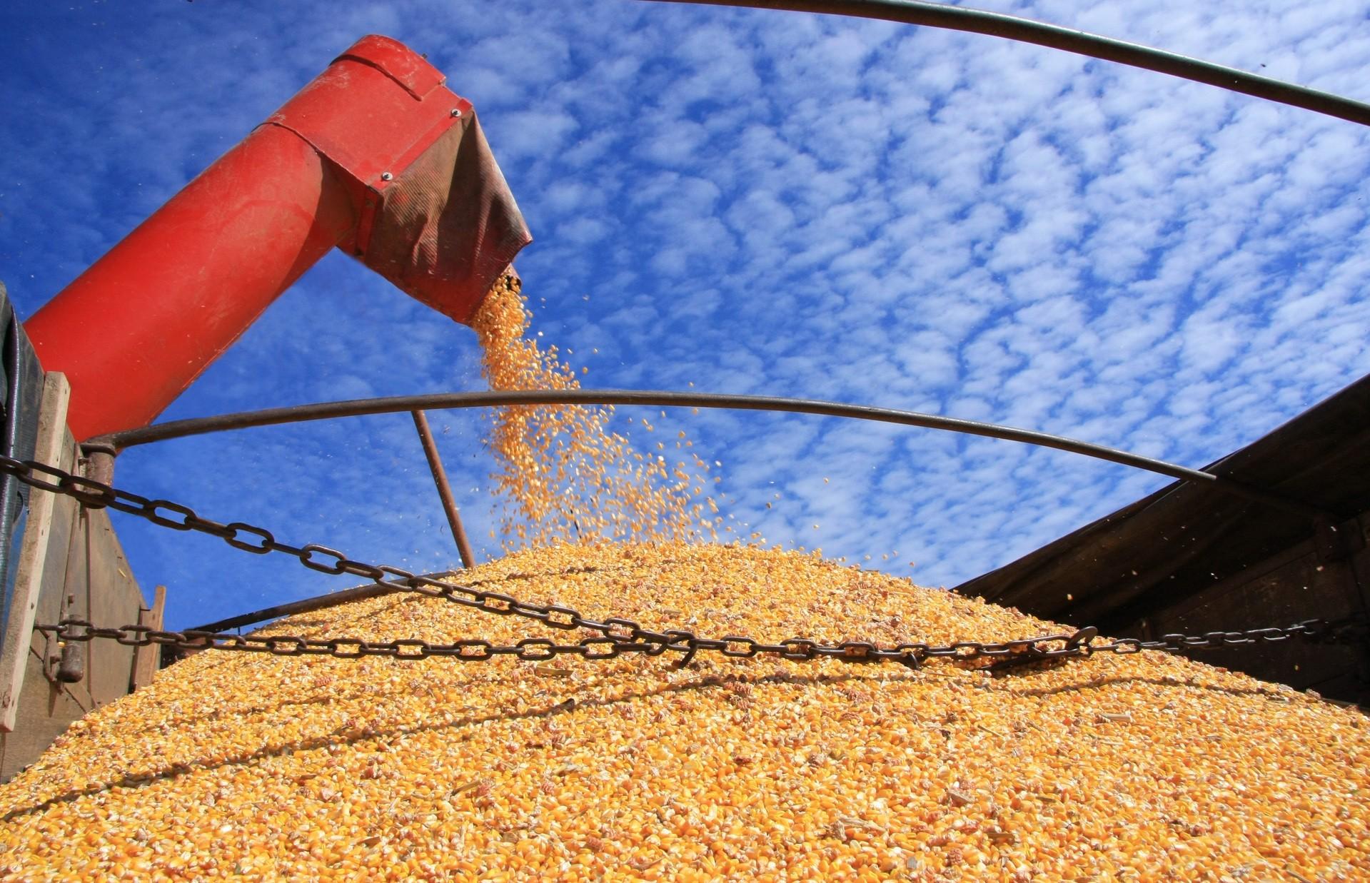 Colheita da soja está em ritmo lento na região