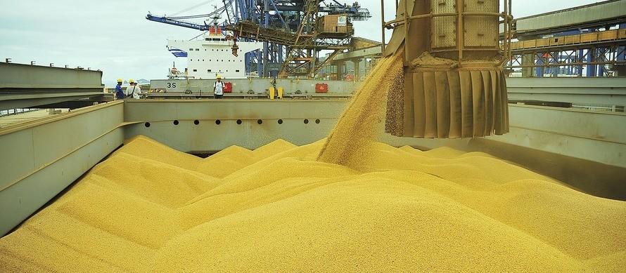 Queda no valor da soja na Bolsa de Chicago limita preço do grão no mercado doméstico