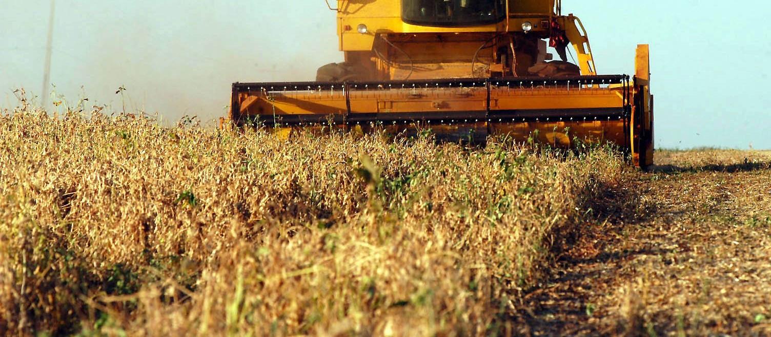 Falta de chuva preocupa produtores; soja começa a secar no campo