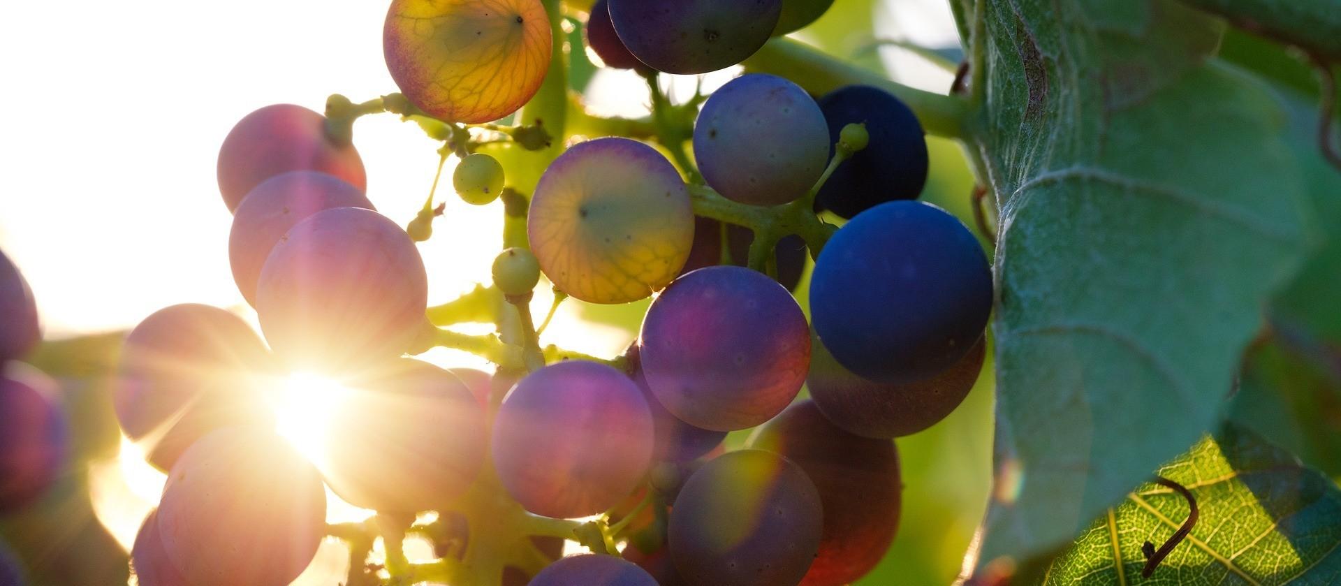 África do Sul e seus vinhos