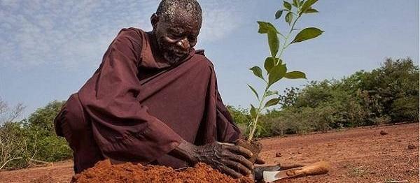 Agricultor ganha 'Nobel alternativo' por plantar árvores em deserto