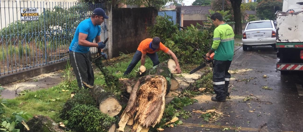 Moradores poderão pagar por corte e poda de árvores