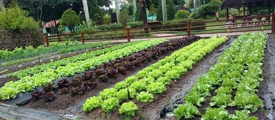 Hortas comunitárias proporcionam alimentação saudável, diversificada e equilibrada
