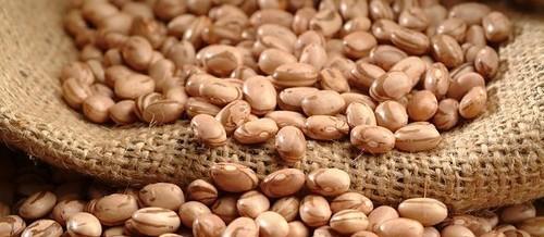 Paraná sofreu quebra na colheita de feijão