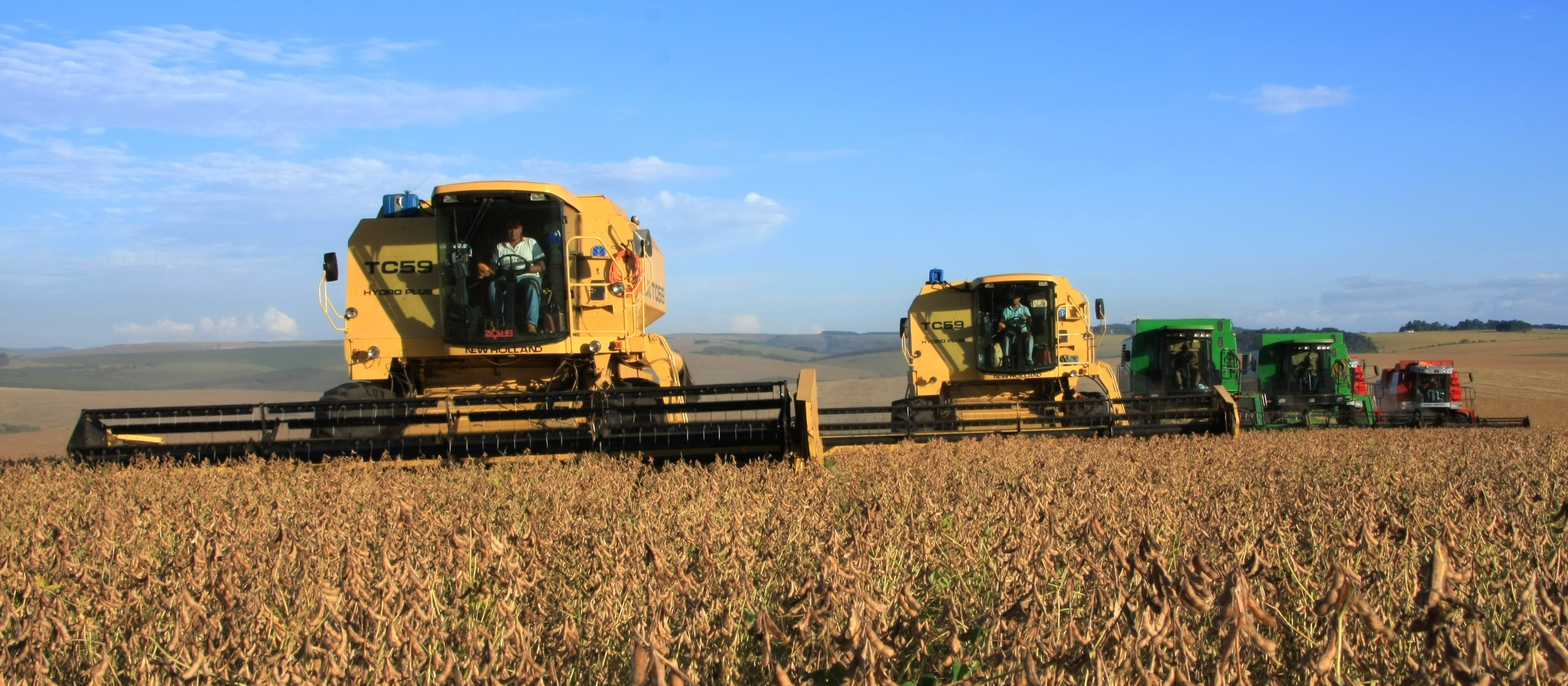 Chuvas escassas afetam a produtividade da soja