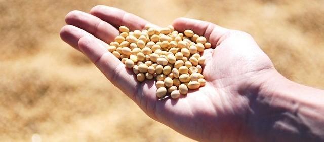Melhoria do tempo ajuda produtores de soja
