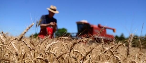 Governo reajusta preço mínimo do trigo