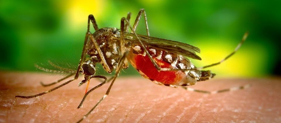 Maringá registra mais um caso de dengue
