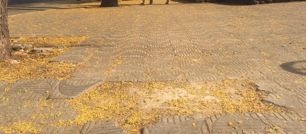 Calçadas irregulares geram 123 multas aos donos de imóveis em Maringá