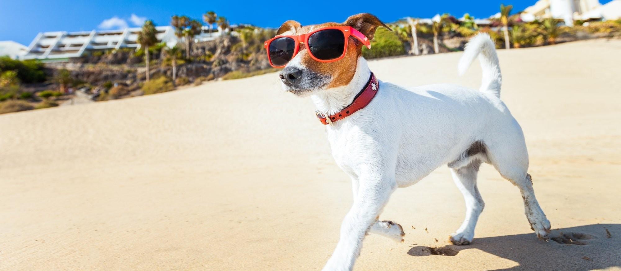 Verão exige atenção ao bem-estar e à saúde dos bichinhos