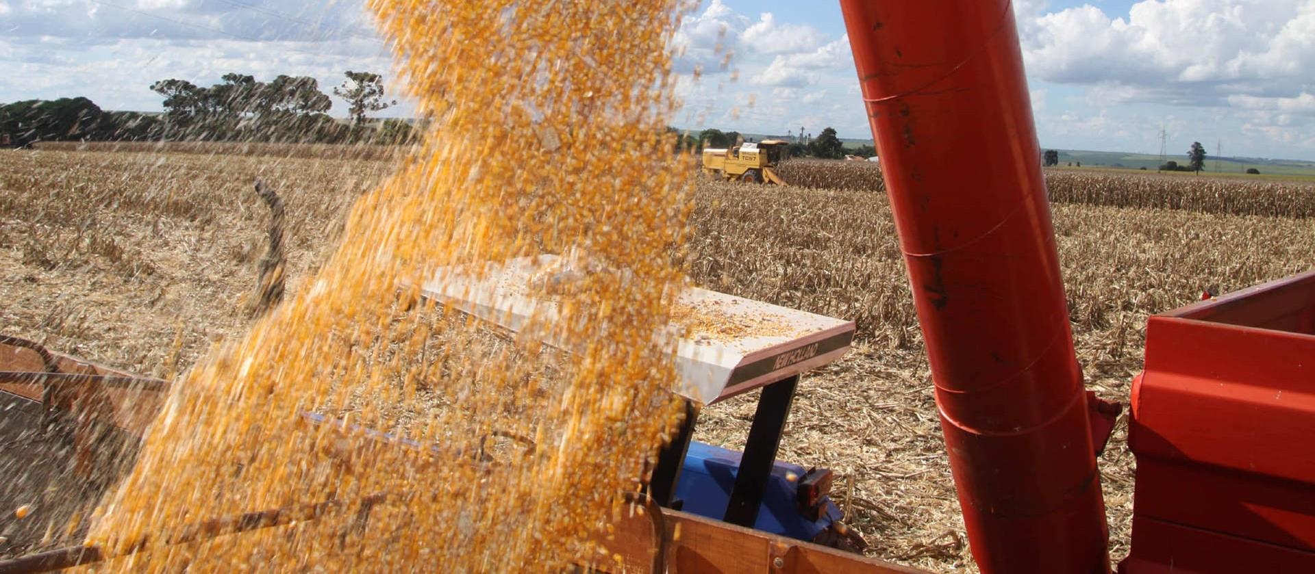 Safra de soja 2019/20 do Brasil é estimada em 122,6 milhões de toneladas