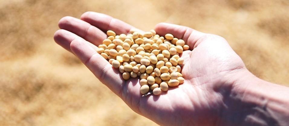 Cotações de produtos agrícolas: quinta-feira [19 de setembro]