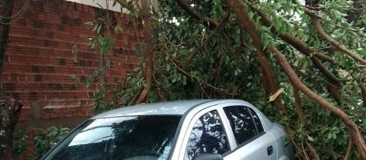 Chuva rápida derruba quatro árvores em Maringá