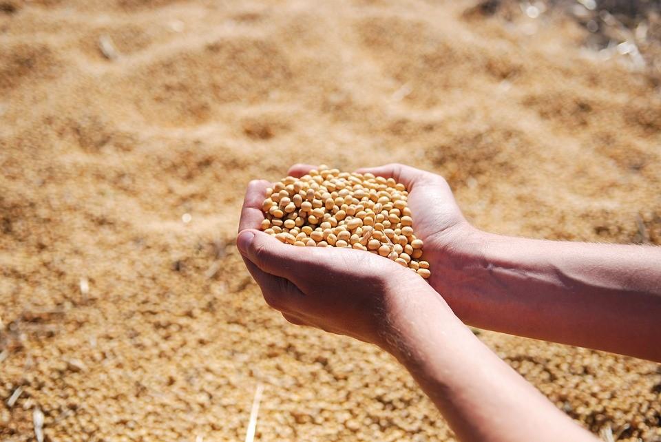 Cotações da soja na Bolsa de Chicago estão em queda
