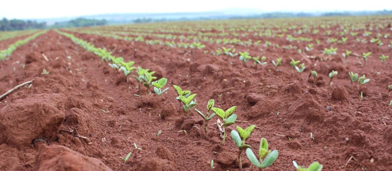 Plantio da soja no Brasil alcança 35% da área projetada para a safra 2019/20