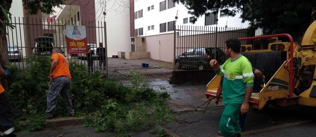 Em três dias, oito árvores caíram em Maringá