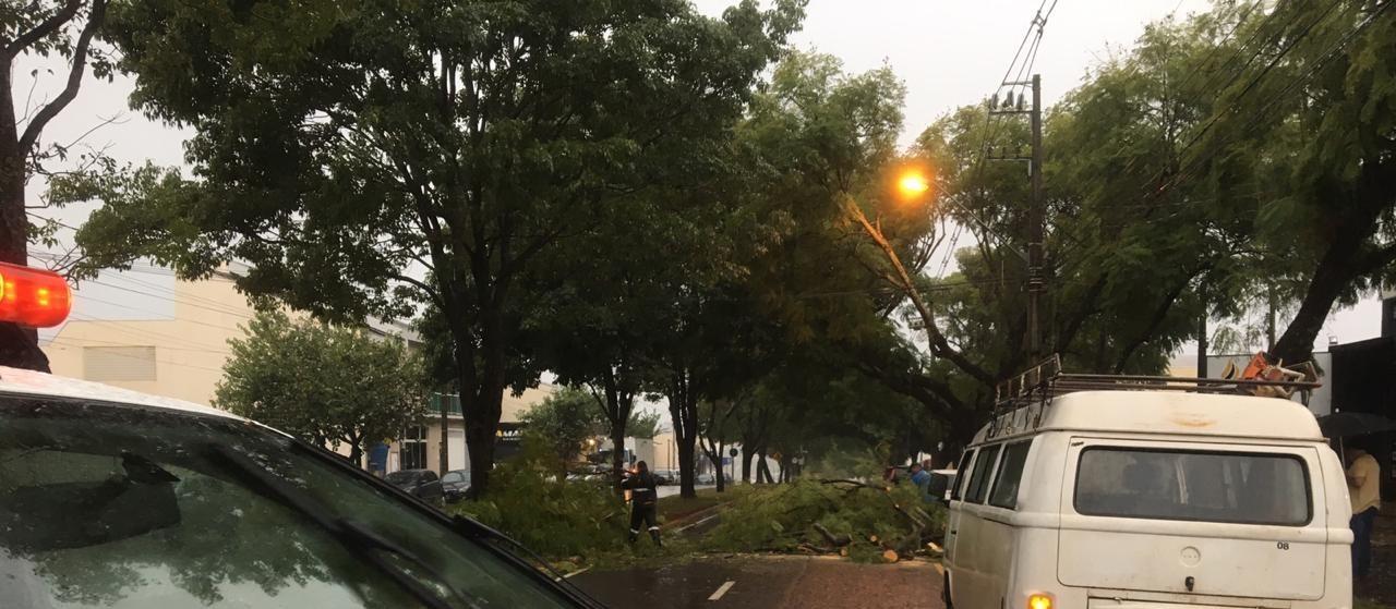 Sete árvores caíram em Maringá devido ao temporal