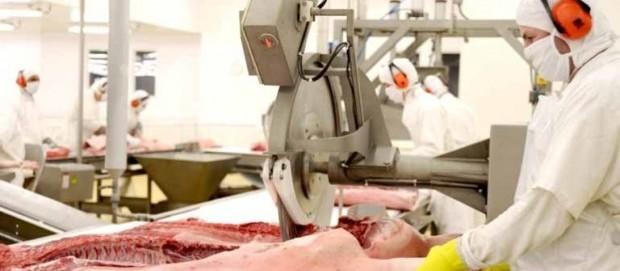 Preço do suíno continua R$ 4kg