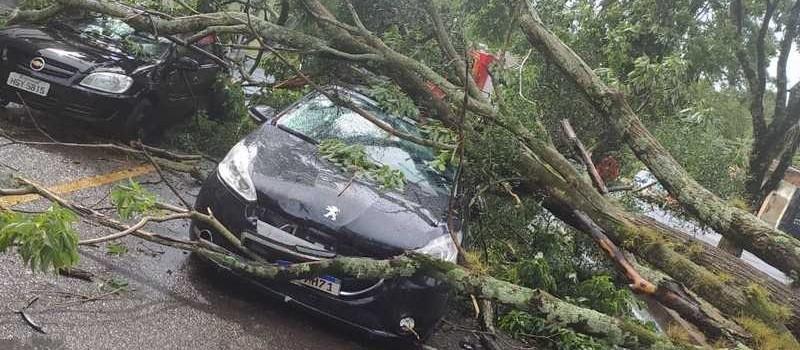 Árvore cai e atinge dois carros em Maringá nesta quarta-feira (3)