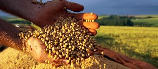 Apesar da estiagem, produtores do Paraná colhem safra recorde